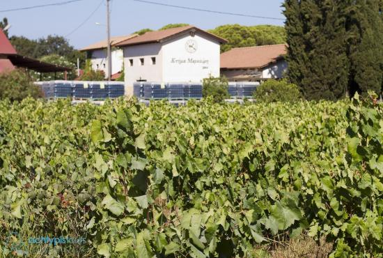 Katakolon Tour to Mercouri Winery and Vineyards