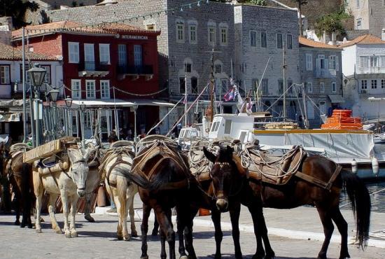 hydra_donkeys.jpg