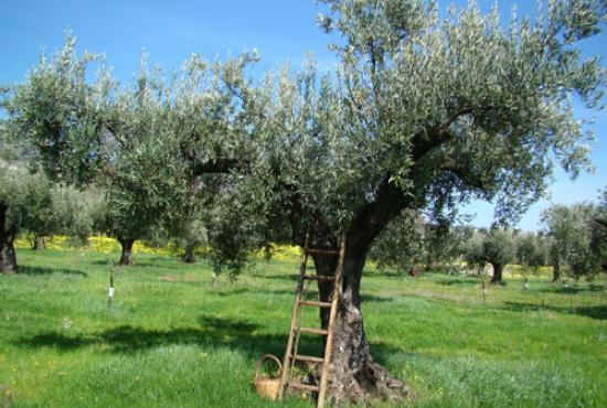 Tour to Terriade's museum ,  Agiasos Village & Ouzo distillery