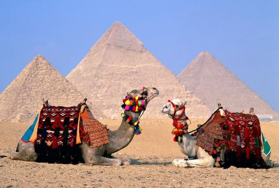 Alexandria port- Camel and Jeep Safari Tour