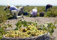 Santorini tour: Akrotiri , Santo Wines Winery and Fira
