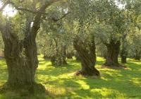 Lesvos/Mytilini- Tour to Agiassos Village & Terriade Museum