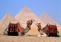 Port Said-Camel and Jeep Safari Tour