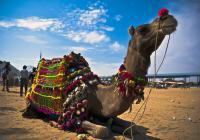 Sokhna port-Camel and Jeep Safari