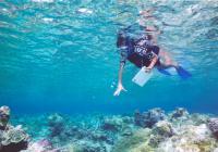 Safaga port -Snorkeling at Safaga