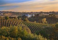 Flavours of Tuscia Tour